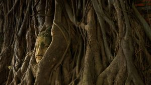 Ayuttaya Buddha