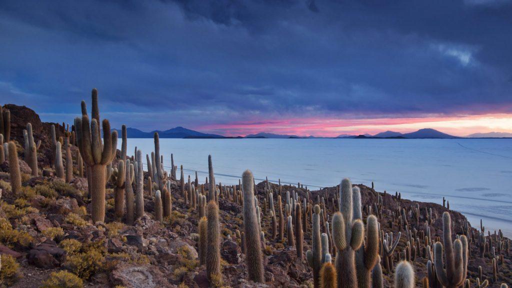 Cacti Isla Pescado
