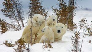 Manitoba Cubs