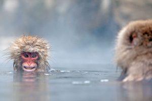 Monkey Soak