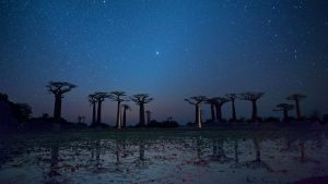 Morondava Baobab