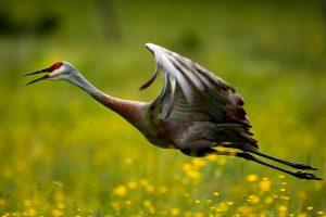 Ont Cranes
