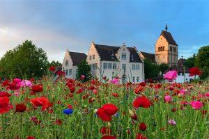 Reichenau Sommer