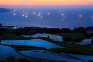 Rice Fields Lights