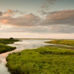 Shediac Marshland