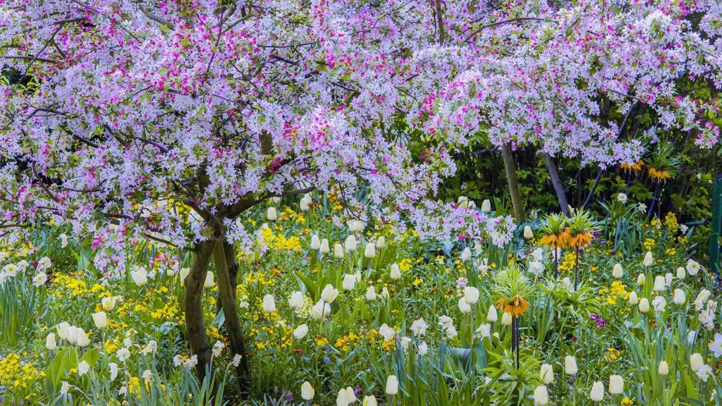 Springtimein Giverny