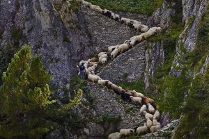 Steep Sheep