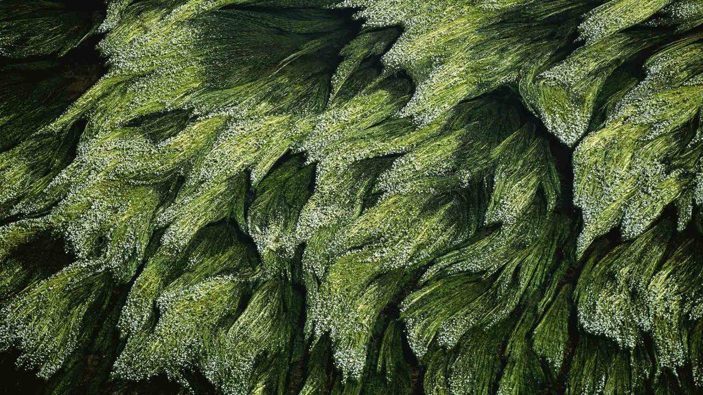Subaquatic Vegetation