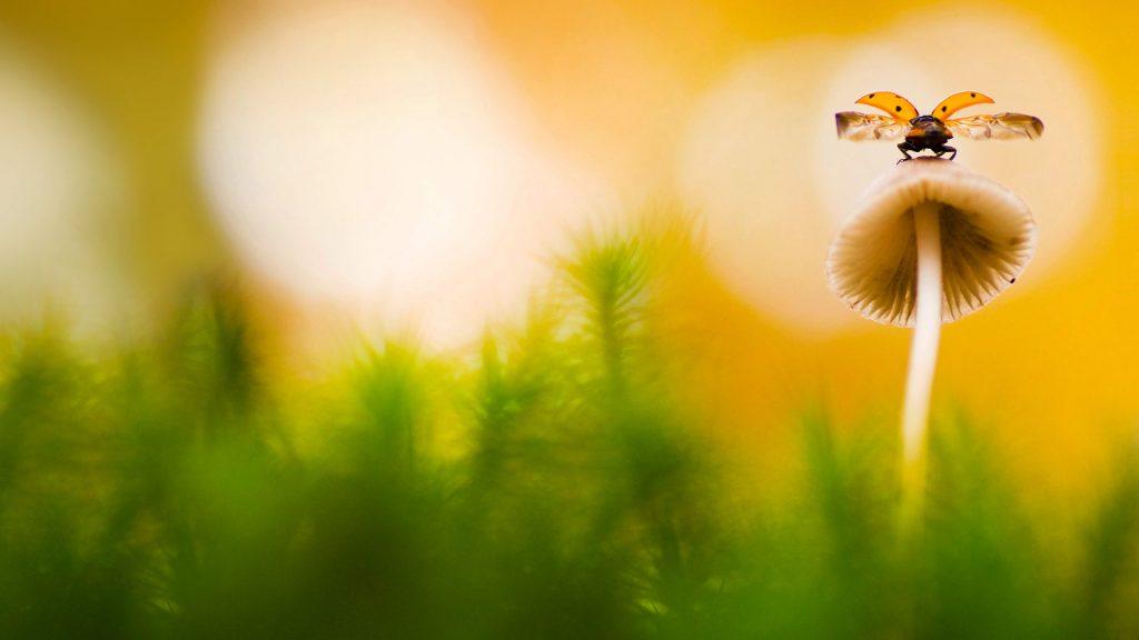 Tiny Ladybird