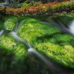 Algae Rocks