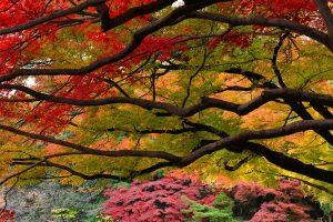 Autumnleaves Tokyo