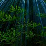CRG Ferns