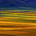 Hulunbuir Prairie