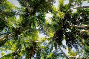 Maho Bay Palms