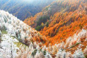 Nagano Winter