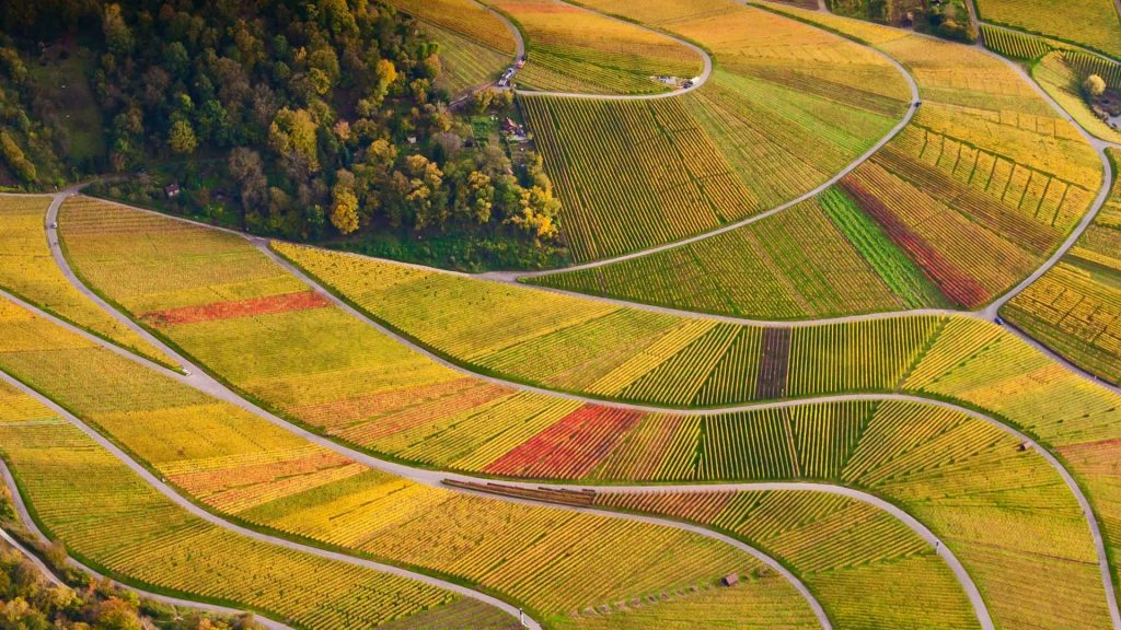 Rotenberg Vineyards