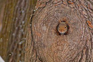 Solstice Squirrel