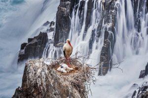 Stork Cliffs