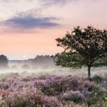 Wahner Heide