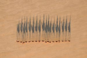 Camels Broome