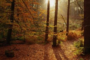 Cheshire Autumn