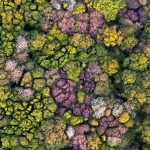 Forest Aerial Picardy