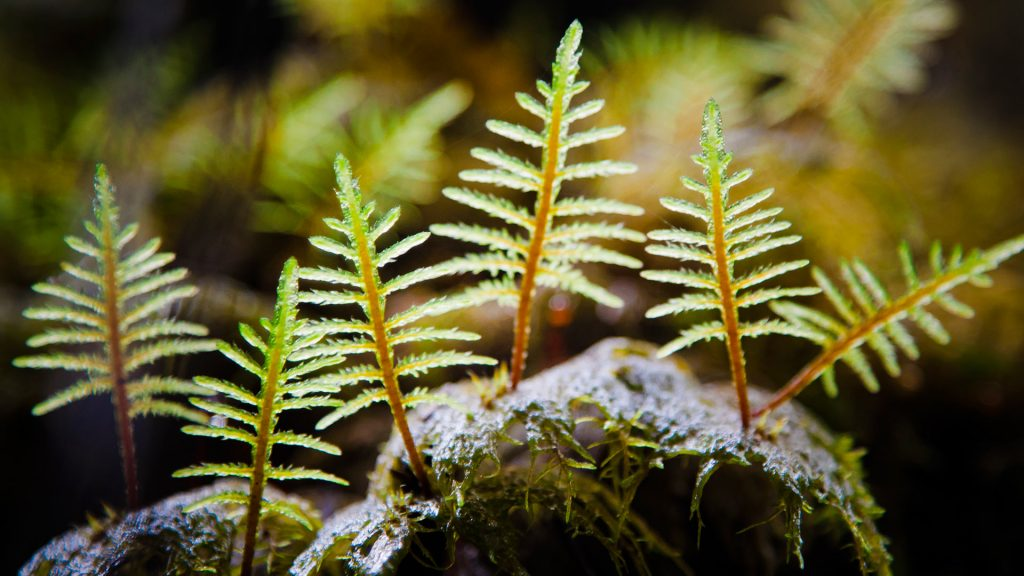 Forest Moss2