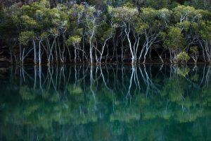 Garigal Mangroves