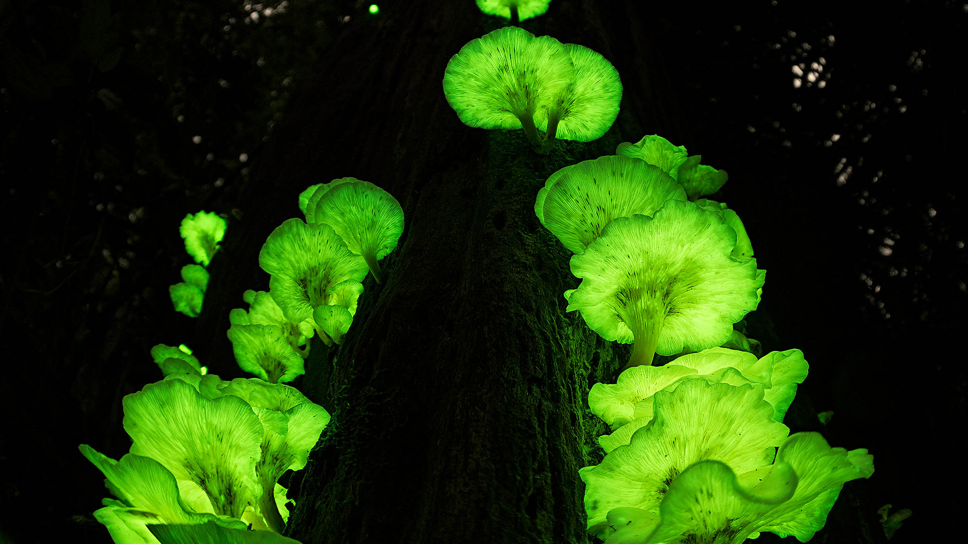 Ghost Fungus