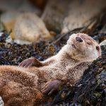 Otter Chillin