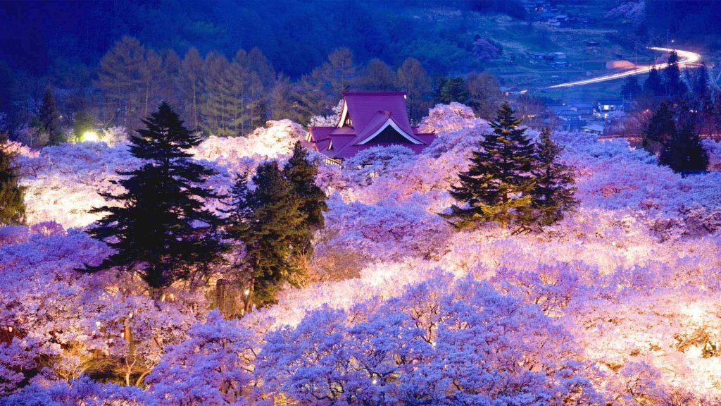 Sakura Hajimari