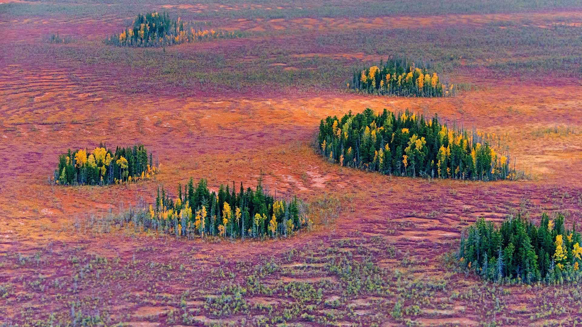 Siberia Foliage