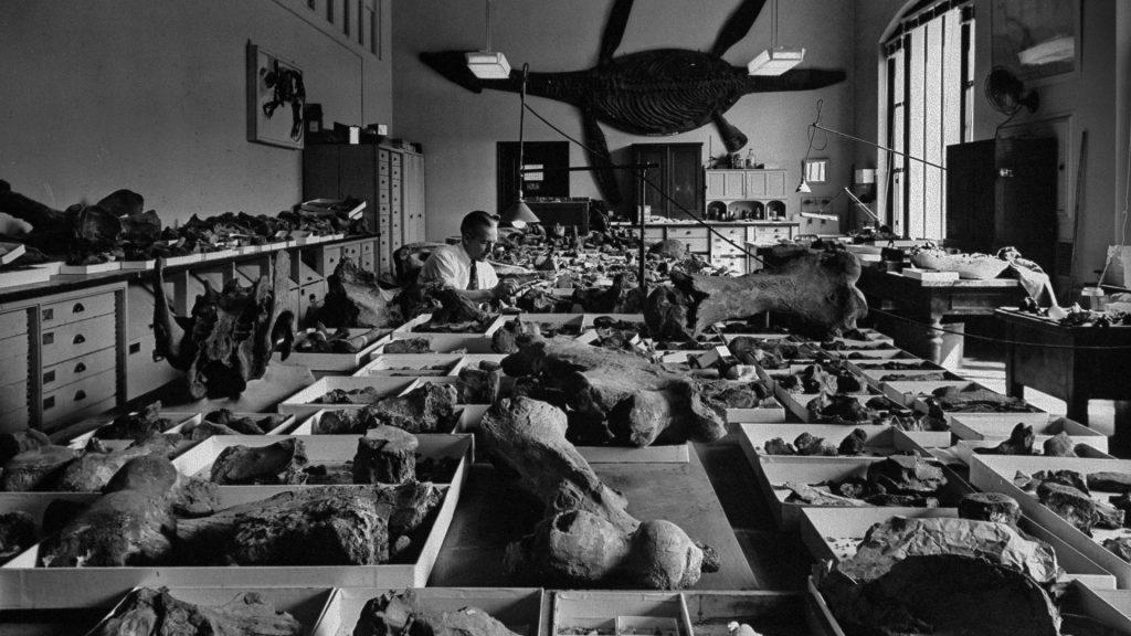 Smithsonian Bones