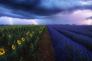Sun Flowers Storm