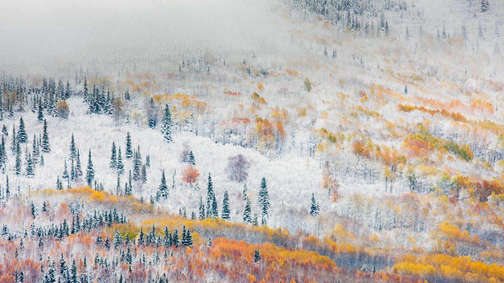 Fairbanks Snow