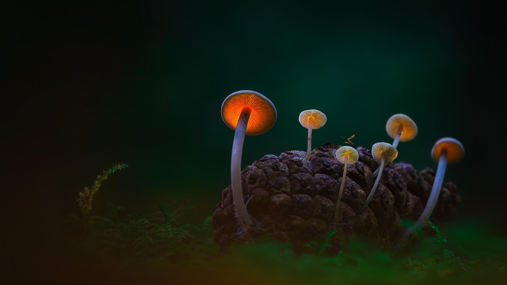 Illuminated Mushrooms