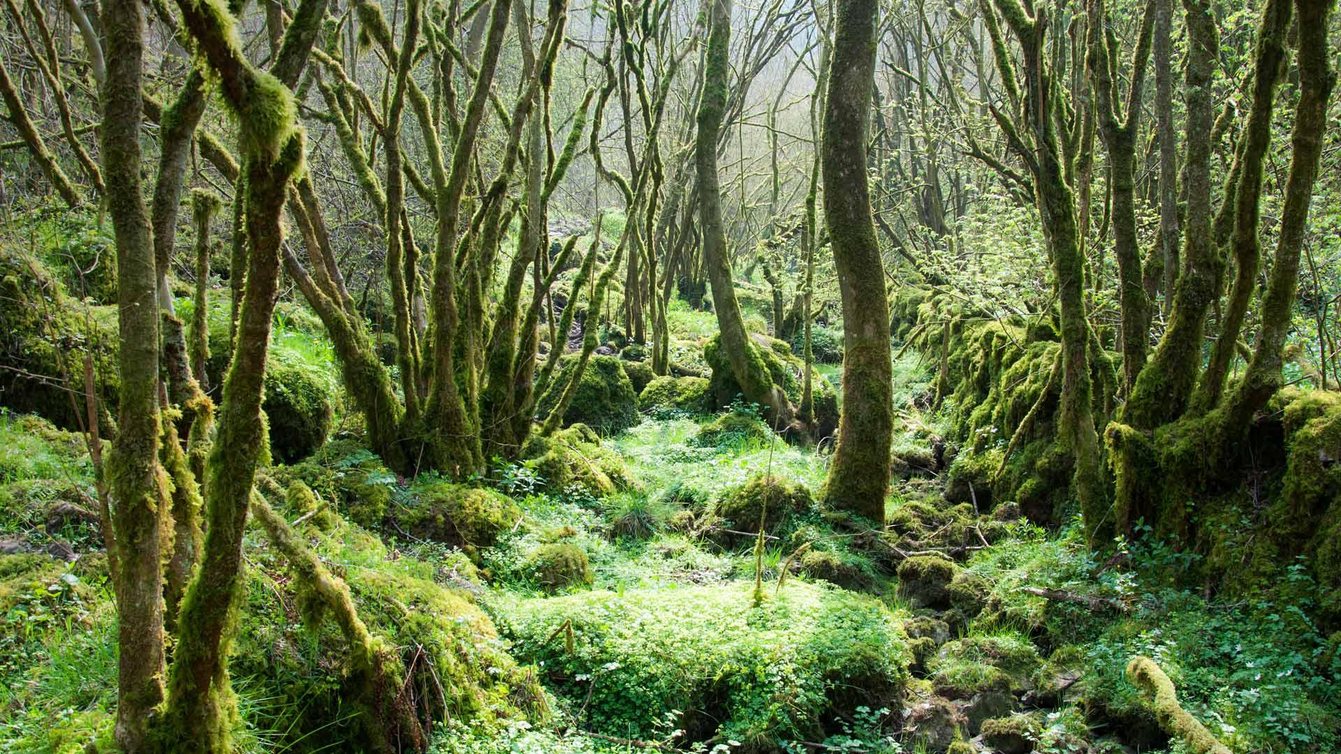 Moss Trees