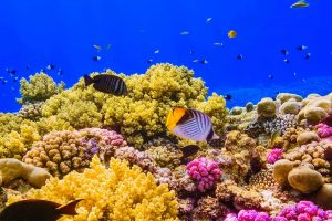 Red Sea Coral Video