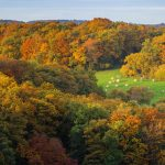 Roched Oetre Autumn