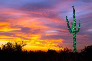 Saguaro Lights