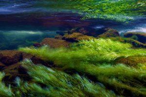 Snowdonia Algae