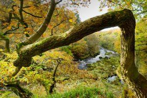 Strid Wood