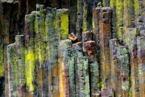 Umpqua Lichen