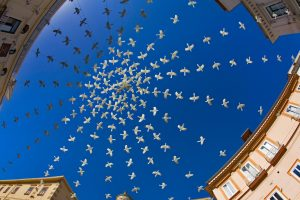 Doves Piazza