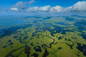 Everglades Aerial NP