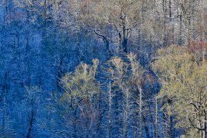 Great Smoky Mountain NP