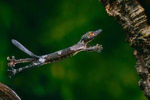 Henkel Gecko