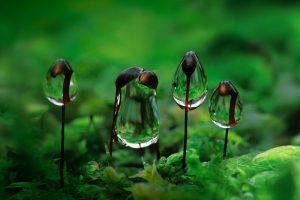 Moss Droplets