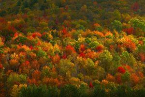 NY Fall Foliage