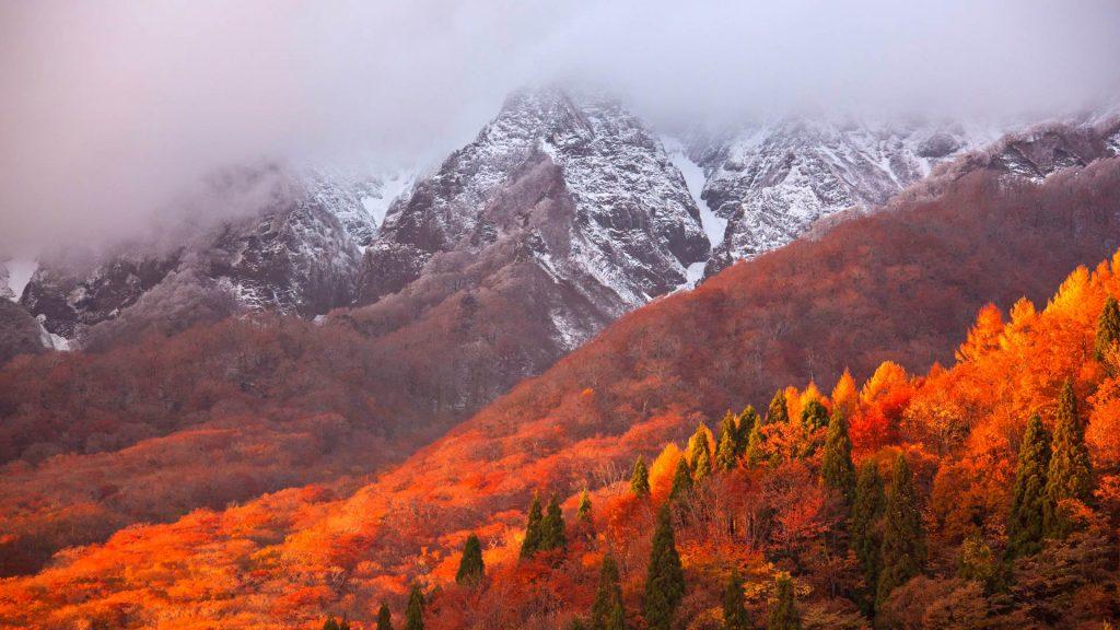 Oyama Leaves